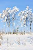 Vintertrees Arkivfoto