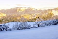 Vintertrees Arkivfoton