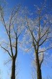 Vintertrees royaltyfri foto
