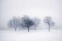 Vintertrees i dimma royaltyfria foton