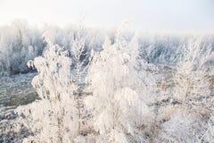 Vintertrees i snow Arkivfoto