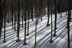 Vintertrees med skuggor royaltyfria bilder