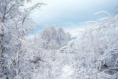 Vintertrees som räknas med rimfrost royaltyfria bilder
