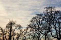 Vintertreetops och solnedgång Arkivbild