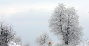 Vintertrree och vägmärke för hastighetsbegränsning 50kmh Royaltyfri Foto