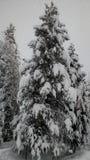 Vinterunderland Royaltyfria Bilder