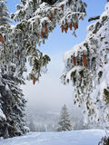 Vinterunderland, snöig skogglänta Royaltyfri Bild