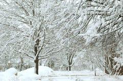 vinterunderland xi Arkivfoto