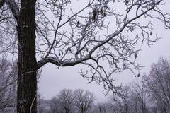 Vintervädersnö och is fotografering för bildbyråer