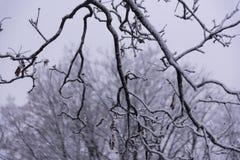 Vintervädersnö och is royaltyfria bilder