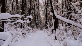 Vinterväg i en snöig skog royaltyfri fotografi