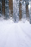 Vinterväg i sequoianationalparken, Kalifornien Arkivfoton