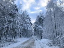 Vinterväg i skog royaltyfria foton