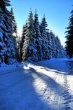 Vinterväg med dolda granar för snö Arkivbild