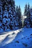 Vinterväg med dolda granar för snö Royaltyfri Fotografi