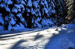 Vinterväg med dolda granar för snö Royaltyfri Foto