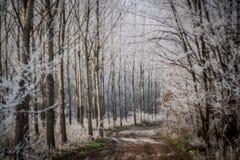 Vinterväg och trees Royaltyfri Foto