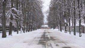 Vinterväg på sidorna, som träd växer av, bakgrund, kopieringsutrymme, långsam mo som är utomhus- arkivfilmer