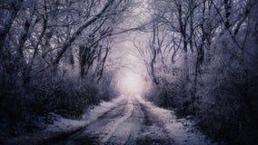 Vinterväg som omges av träd royaltyfria bilder