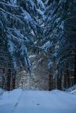 Vinterväg till och med skogen Arkivbild