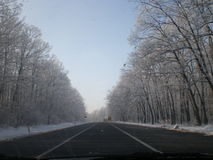 Vintervägträd Arkivfoto
