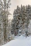 Vintervandringsled royaltyfria bilder