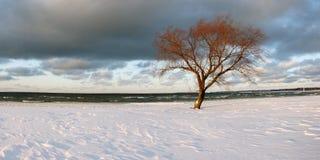 Vintervindar och snö Fotografering för Bildbyråer