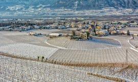Vintervingårdlandskap som är dolt med snö Trentino Alto Adige, Italien Huvudsakliga ekonomiska faktorer är vinodling längs den sö Royaltyfri Bild