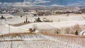 Vintervingårdlandskap som är dolt med snö Trentino Alto Adige, Italien Huvudsakliga ekonomiska faktorer är vinodling längs den sö Royaltyfria Foton