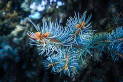 Vintervisaråt i rimfrost royaltyfri fotografi