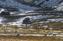 VinterYellowstone landskap fotografering för bildbyråer