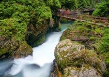 vintgar的峡谷 免版税图库摄影