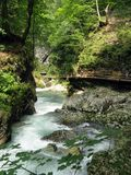Vintgar Gorge. (Soteska Vintgar) is a 1.6-kilometre gorge in Slovenia, near Bled. Carved by the Radovna River, the sheer canyon walls are 50 to 100 metres high Royalty Free Stock Photos