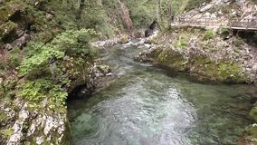 Vintgar gorge,radovna river,slovenie 144155 stock video