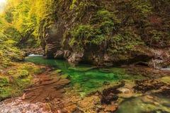 Vintgar klyfta och Green River som blödas, Triglav-Slovenien Arkivfoto