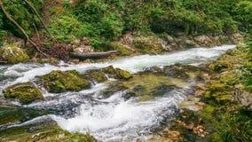 Vintgar Slovenia Obraz Royalty Free