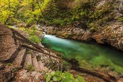 Vintgar wąwóz i zieleni rzeka, Krwawiąca, Slovenia Fotografia Stock