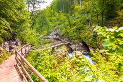 Vintgar wąwóz, Slovenia Rzeka blisko Krwawiącego jeziora z drewnianymi turystycznymi ścieżkami, mostami nad rzeka i siklawami, Wy zdjęcie stock