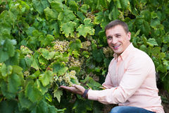 Vintner with clusters of grape outdoors. Satisfied male vintner with clusters of grape smiling outdoors Royalty Free Stock Photos