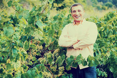 Vintner with clusters of grape outdoors. Satisfied male vintner with clusters of grape smiling outdoors Stock Photography