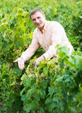 Vintner with clusters of grape outdoors. Satisfied male vintner with clusters of grape smiling outdoors Royalty Free Stock Photography