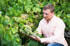 Vintner with clusters of grape. Satisfied male vintner with clusters of grape smiling outdoors Stock Image