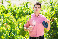 Vintner with glass of wine. Portrait of male vintner with glass of wine in summer Royalty Free Stock Images