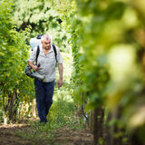Vintner  in his vineyard spraying chemicals Stock Photography