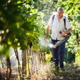 Vintner  in his vineyard spraying chemicals. Vintner walking in his vineyard spraying chemicals on his vines Stock Image