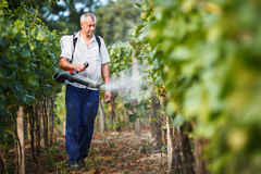 Vintner  in his vineyard spraying chemicals Stock Photos