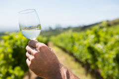 Vintner holding glass of wine Stock Images