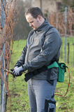 Vintner is pruning in the vineyard Royalty Free Stock Photography