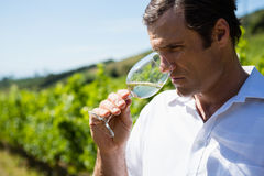 Vintner smelling glass of wine Royalty Free Stock Image