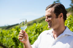 Vintner smelling glass of wine Stock Photography